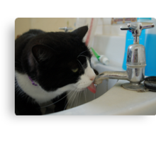 Binky in the Sink Canvas Print