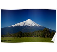 Volcanic Cattle Poster