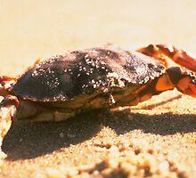 Crab on The Beach Photograph by BravuraMedia