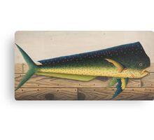 Mahi-Mahi Fish artwork Canvas Print