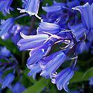 """Blue Belles"" by NordicBlackbird"
