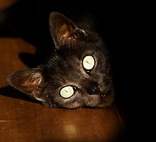 Cat Lying Down by africanidentity