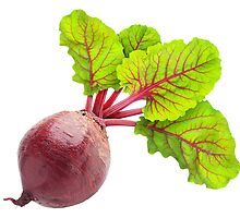Beet #1 by 6hands