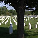 Arlington Cemetery, Virginia, USA by Pat Herlihy