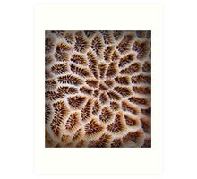 island life series - coral patterns Art Print