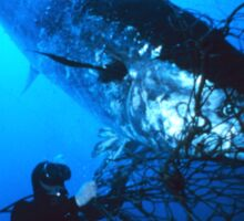 Giant Bluefin Tuna Caught in a Net Sticker