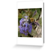 Bumble B Greeting Card