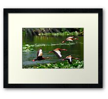 They Whistle When they Fly Framed Print