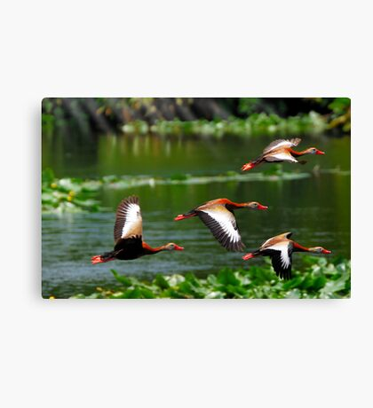 They Whistle When they Fly Canvas Print