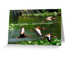 They Whistle When they Fly Greeting Card