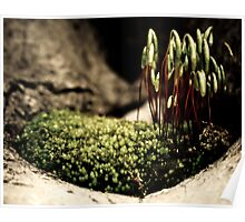 Moss Forest Poster