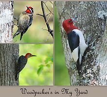 Three different types on woodpeckers by Irvin Le Blanc