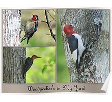 Three different types on woodpeckers Poster