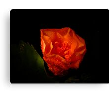 Flowers Are Born At Night Canvas Print
