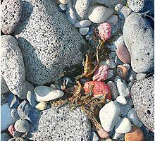 Rocks and Seaweed Photographic Print