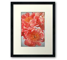 Paeonia #6 Framed Print