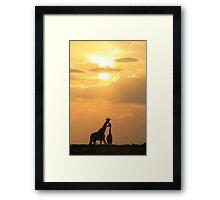 Giraffe Silhouette - Golden Beauty Framed Print
