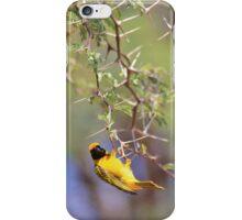 Southern Masked Weaver - Acrobatic Fun iPhone Case/Skin