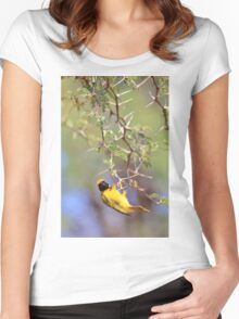 Southern Masked Weaver - Acrobatic Fun Women's Fitted Scoop T-Shirt