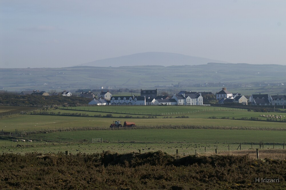 Northern Ireland Sheep Farm by Henri Irizarri