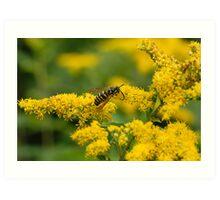 Flower and Yellow-Jacket Hornet Art Print