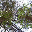 TREE FOR TREES by ELIZABETH B