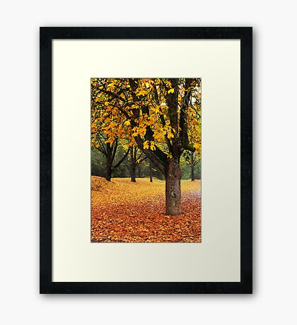 Bright Framed Print