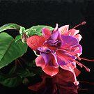 Fuchsia XII  by Tom Newman