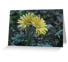 Yellow Gerbera Daisys Greeting Card