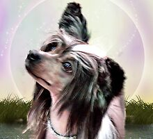 Chinese Crested by Jack Beech