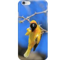 Golden Weaver - Hanging on for LIfe iPhone Case/Skin