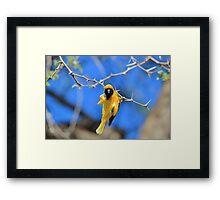 Golden Weaver - Hanging on for LIfe Framed Print