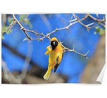 Golden Weaver - Hanging on for LIfe Poster