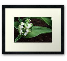 """Parkeit (Parrot) Tulip """"Super Parrot"""" Framed Print"""