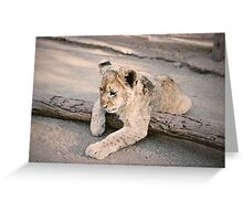 Cub Greeting Card