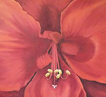 Amaryllis (close up) by Kim Bender