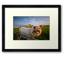 Cheeky Cow Framed Print
