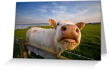 Cheeky Cow by baddoggy