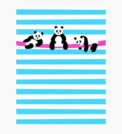 Relaxing Pandas Photographic Print