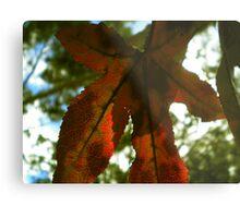 Autumn's Paradox Metal Print