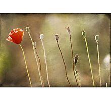 arranged  Photographic Print