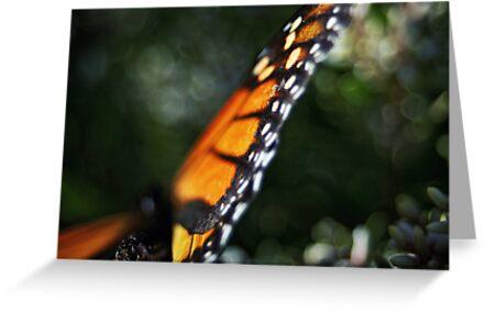 Butterfly Bokeh by SD Smart