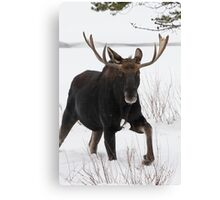 Moose on the Move Canvas Print