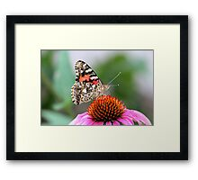 She's a Painted Lady (Vanessa Cardui on Echinacea) Framed Print