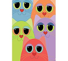 CAT FACES FIVE Photographic Print