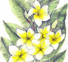 Frangipanis in Bloom by boyerak
