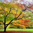 Westonbirt Arboretum, Gloucestershire, UK by buttonpresser