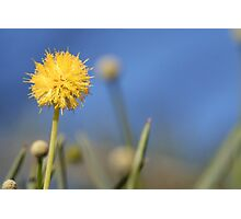Standing out from the crowd! Photographic Print