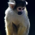 Squirrel monkey by JackPloeg