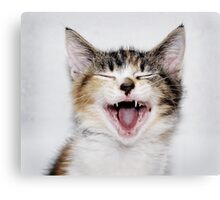Chloe the Cat Canvas Print